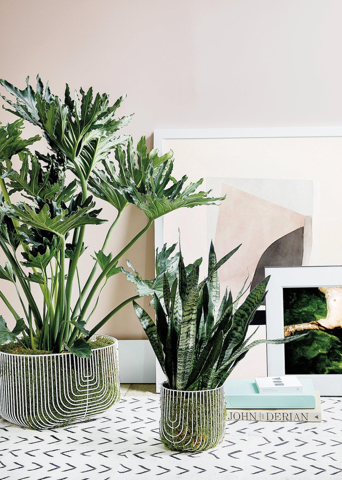 Two houseplants