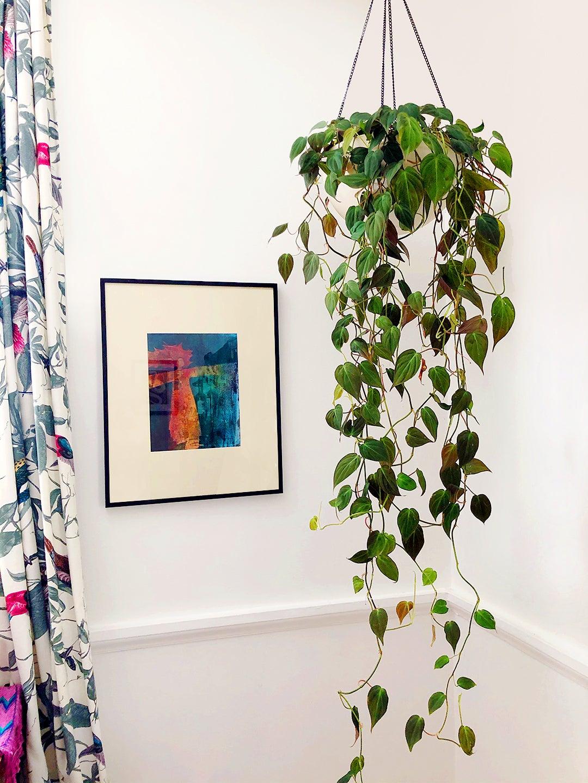 trailing greenery hanging in a corner