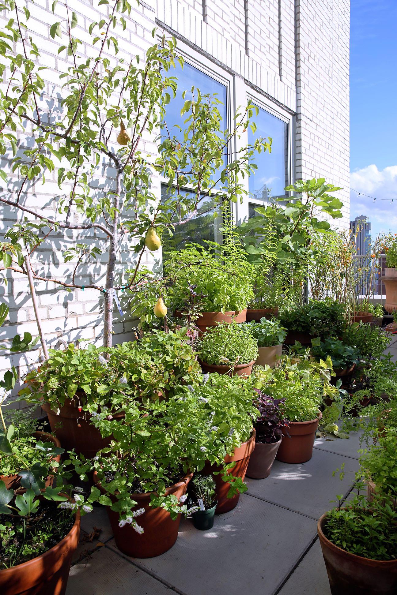 domino-marie-kondo-gardening