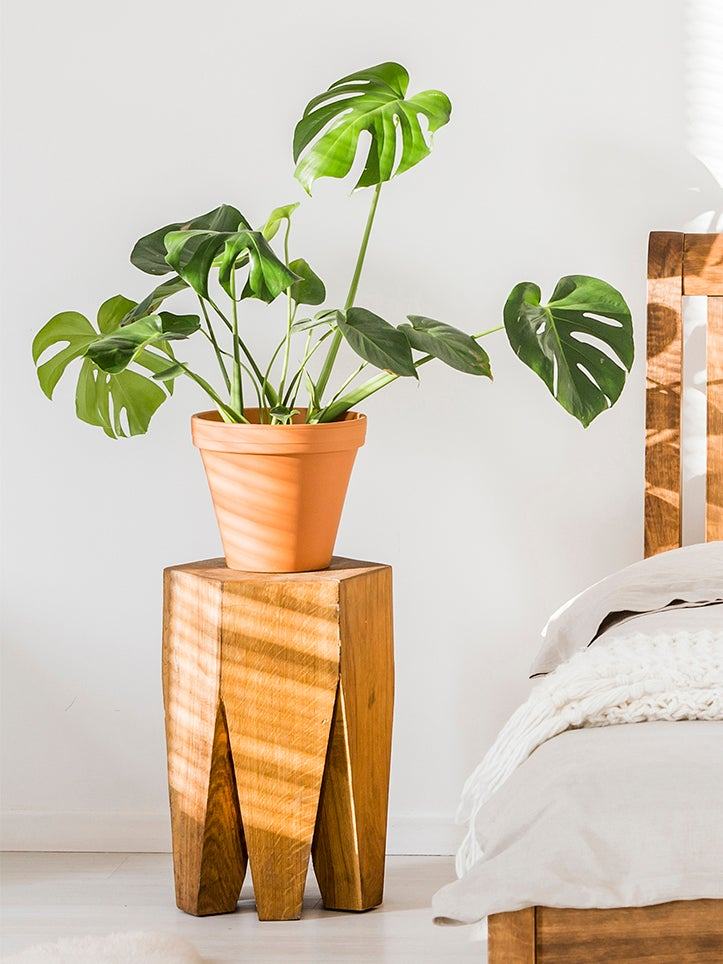 monstera on bedside table