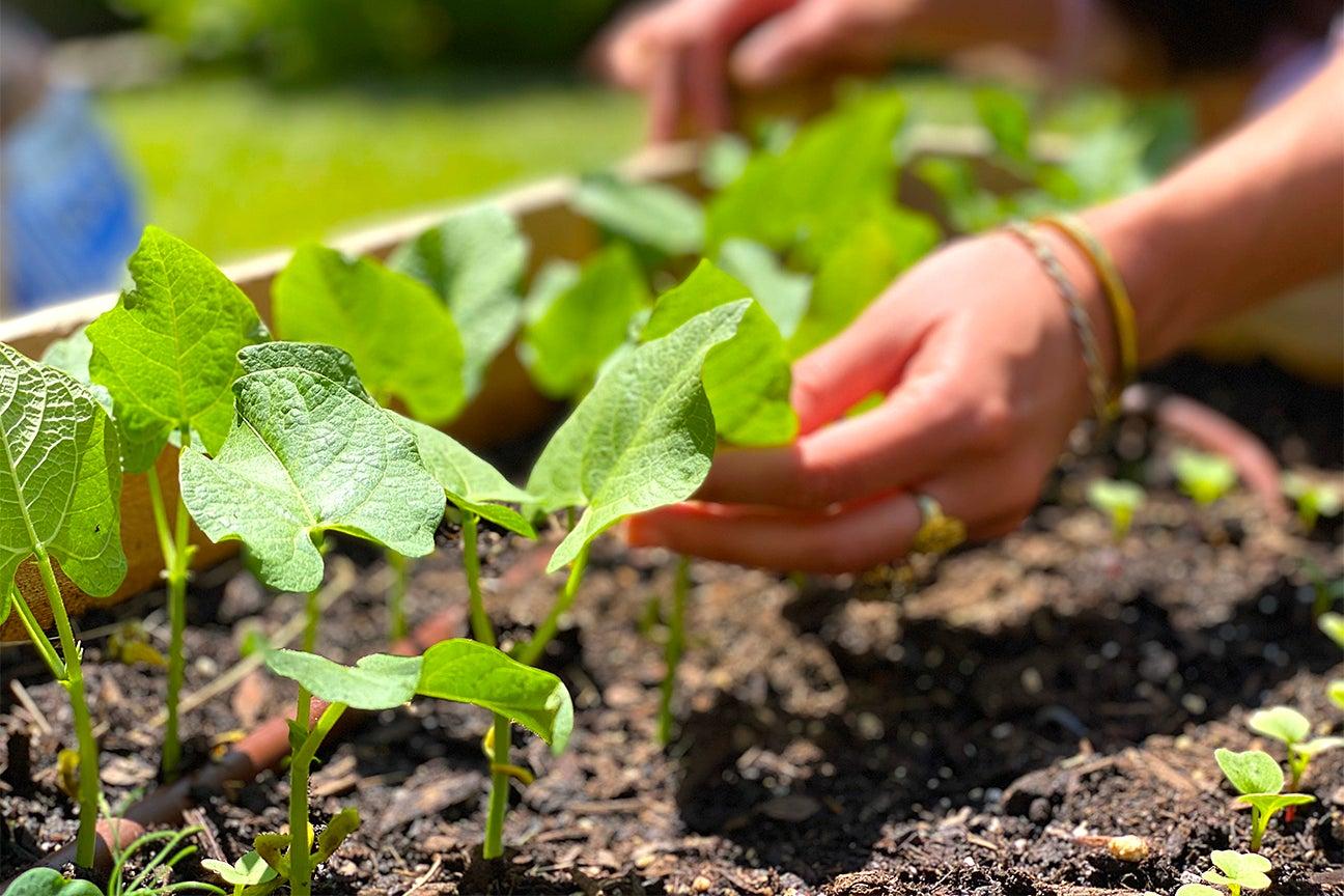 Garden sprouting