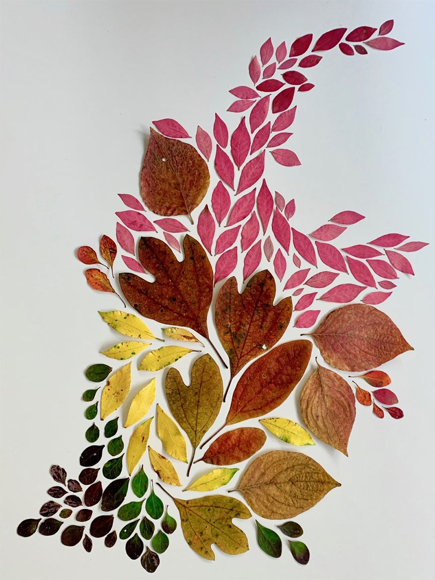 Rainbow leaf arrangement