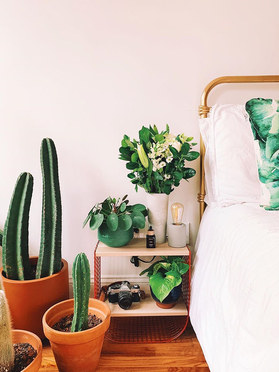 Plants next to bed