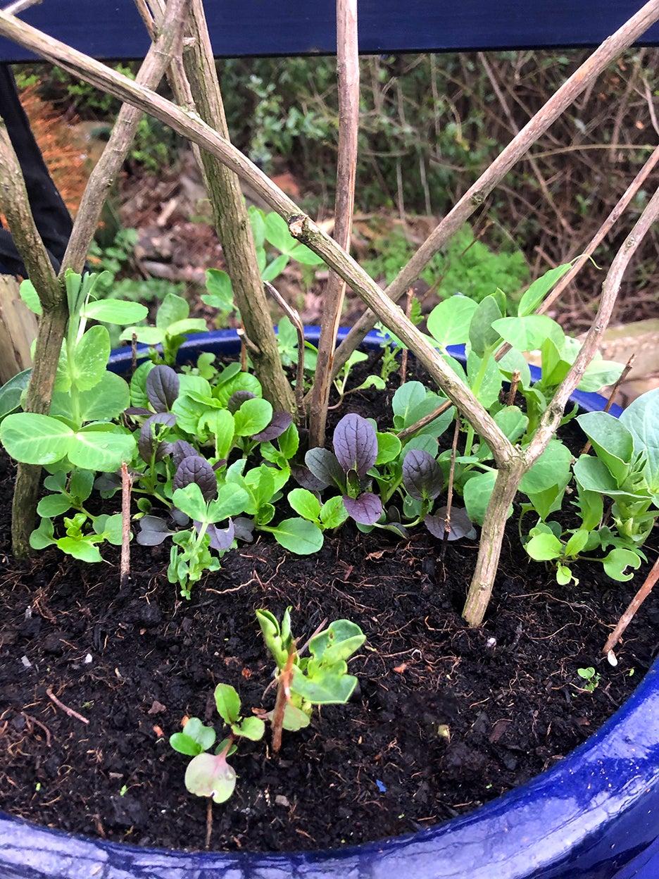 layered planter