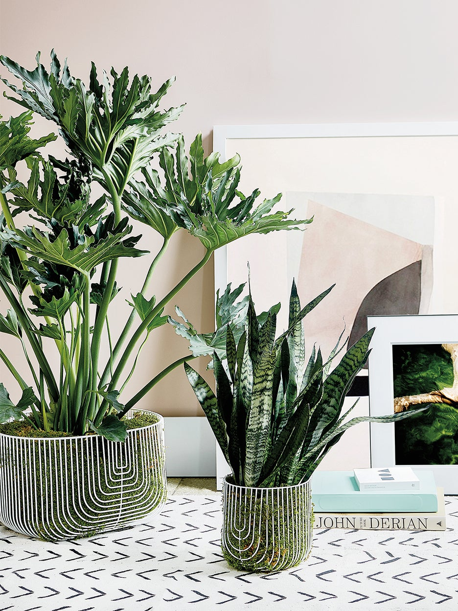 two big plants with graphic floor tile