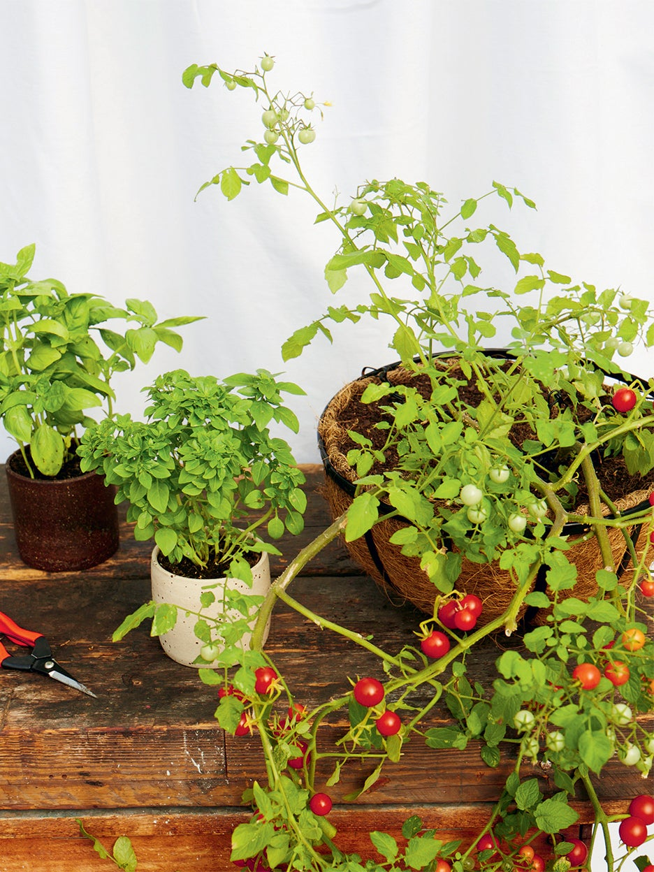 9 Greens That Naturally Ward Off Garden Pests