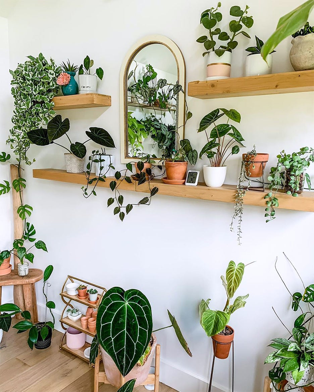 Plants on floating shelves