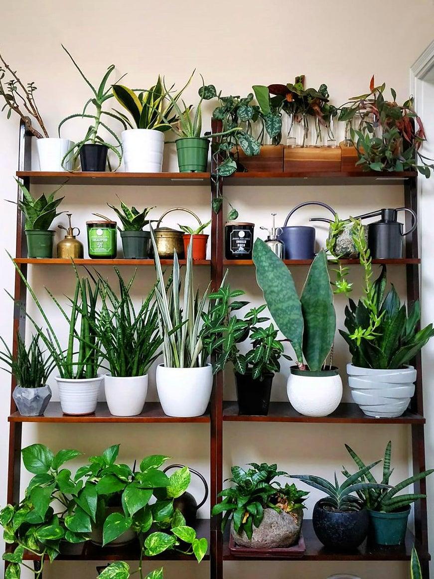 Plants on wooden shelves
