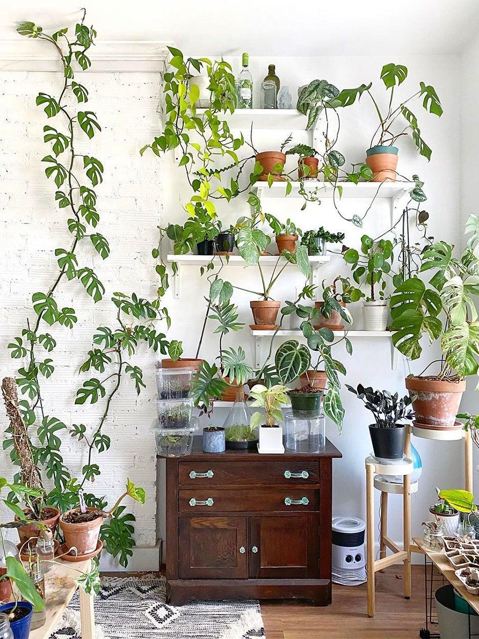 Wall full of plant shelves