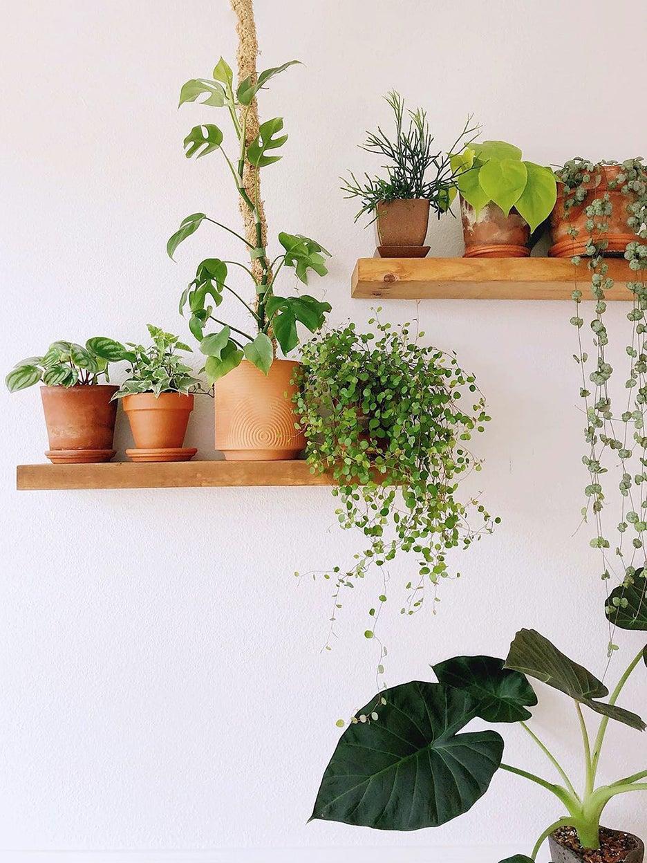 Floating plant shelves