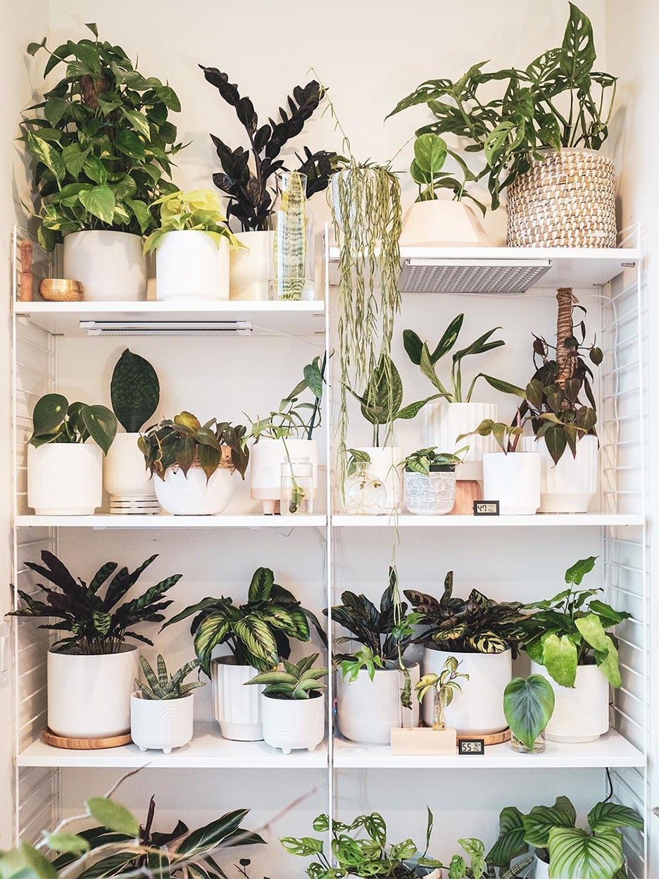 White shelves with plants