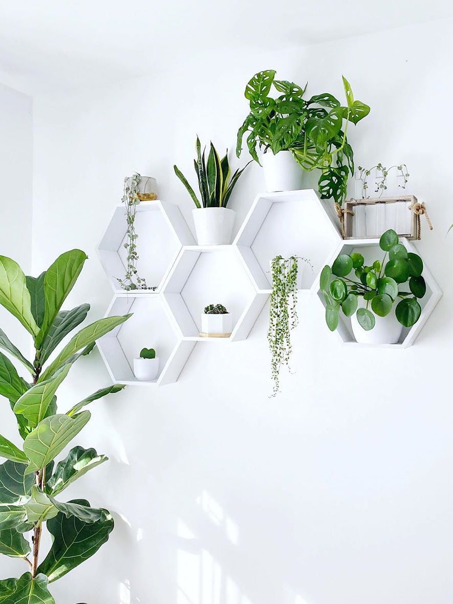 White shelf with plants