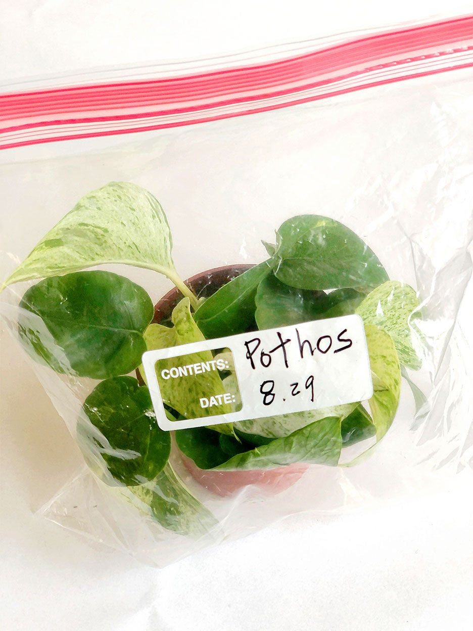 bag with plant cuttings