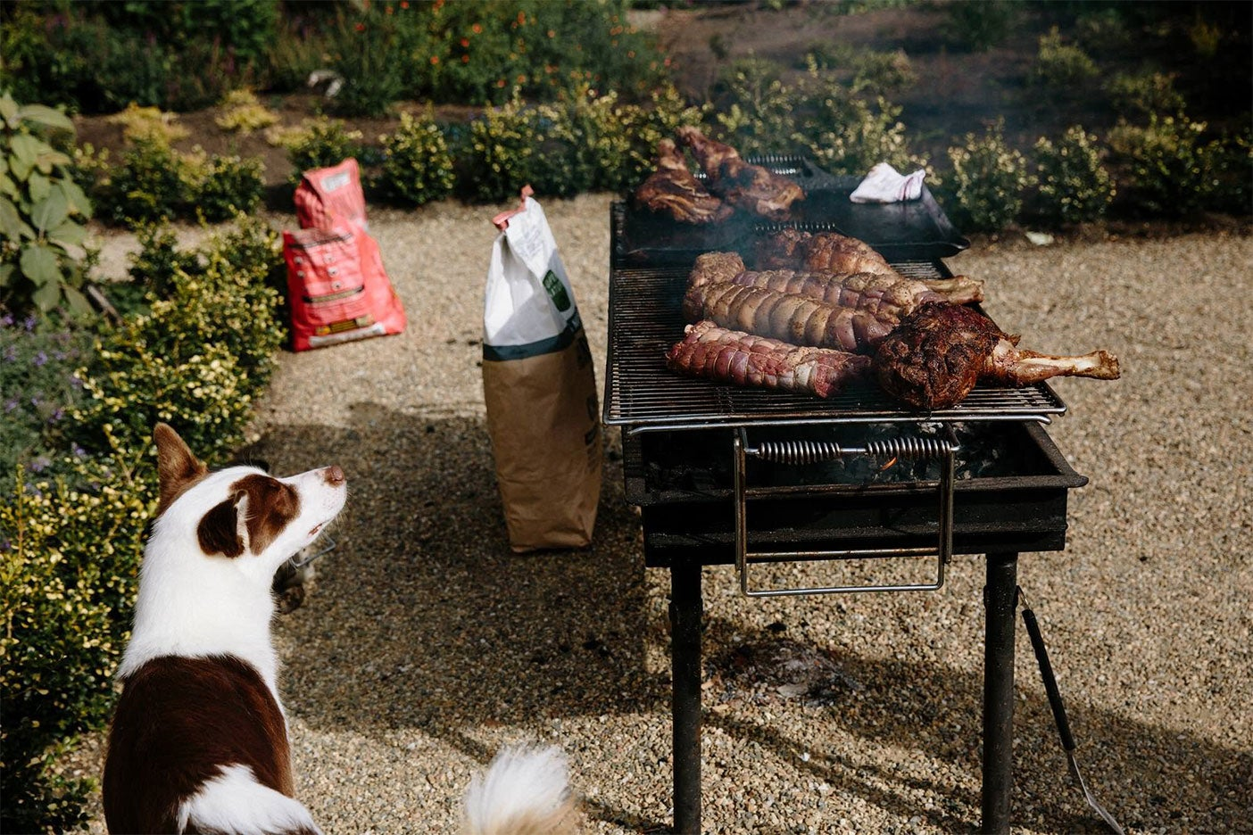 lamb on a grill