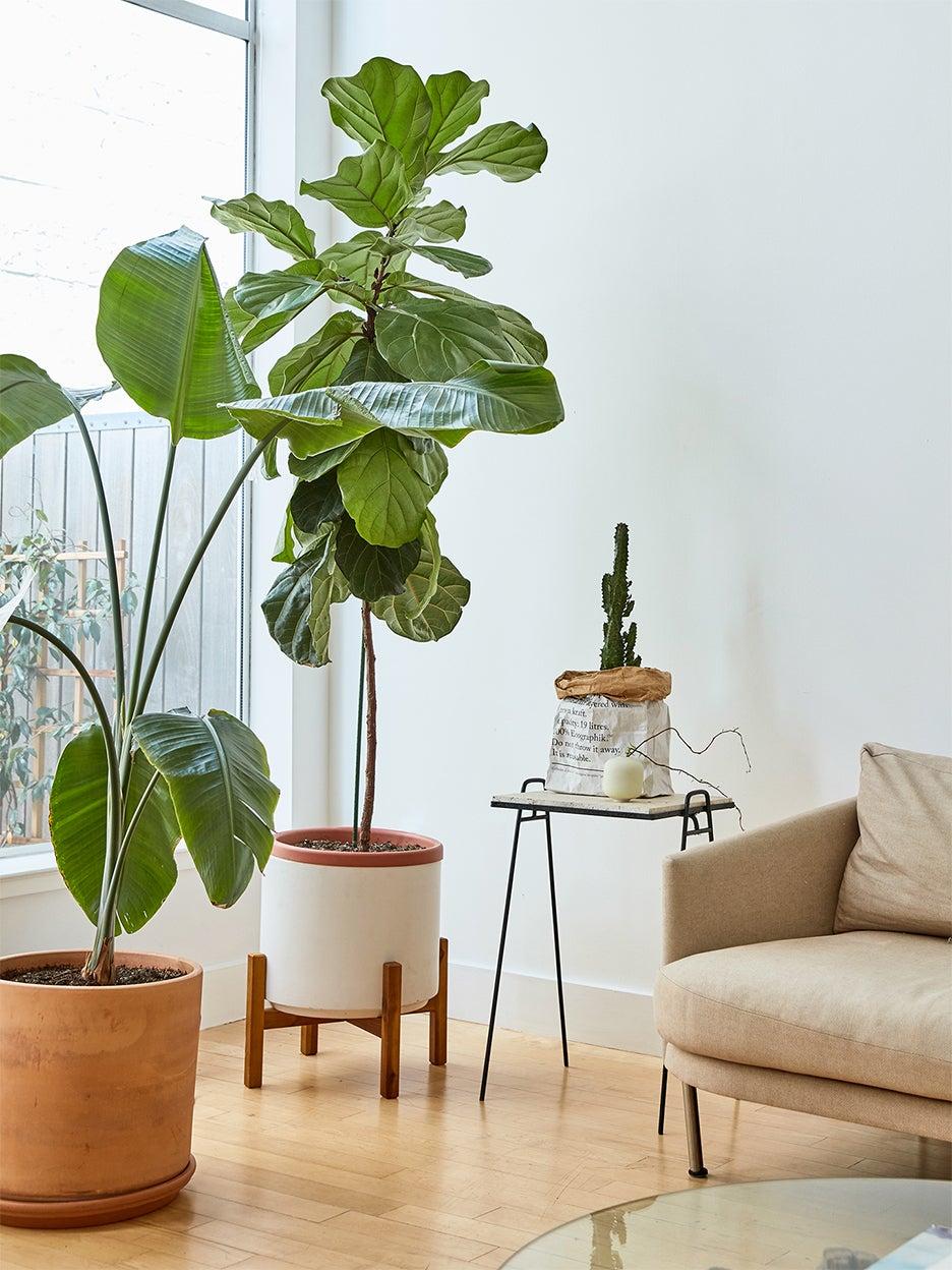 tree in modern living room