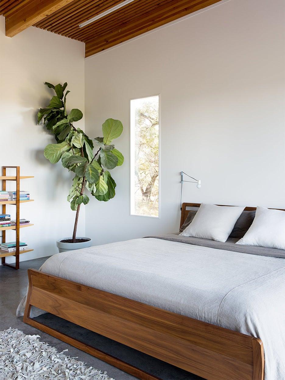 tree in modern bedroom