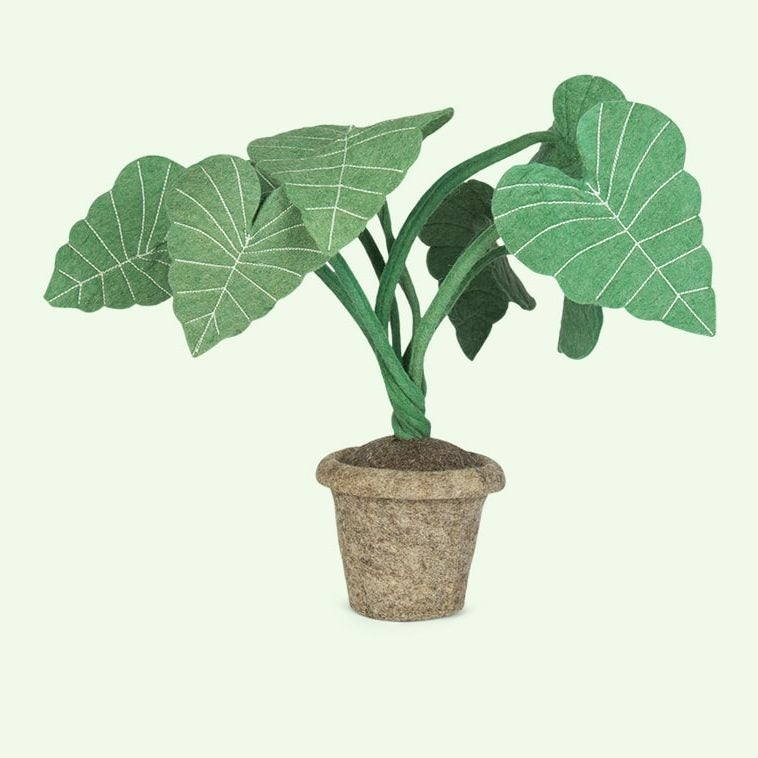 kids-depot-alocasia-plant-green-1920x760_02