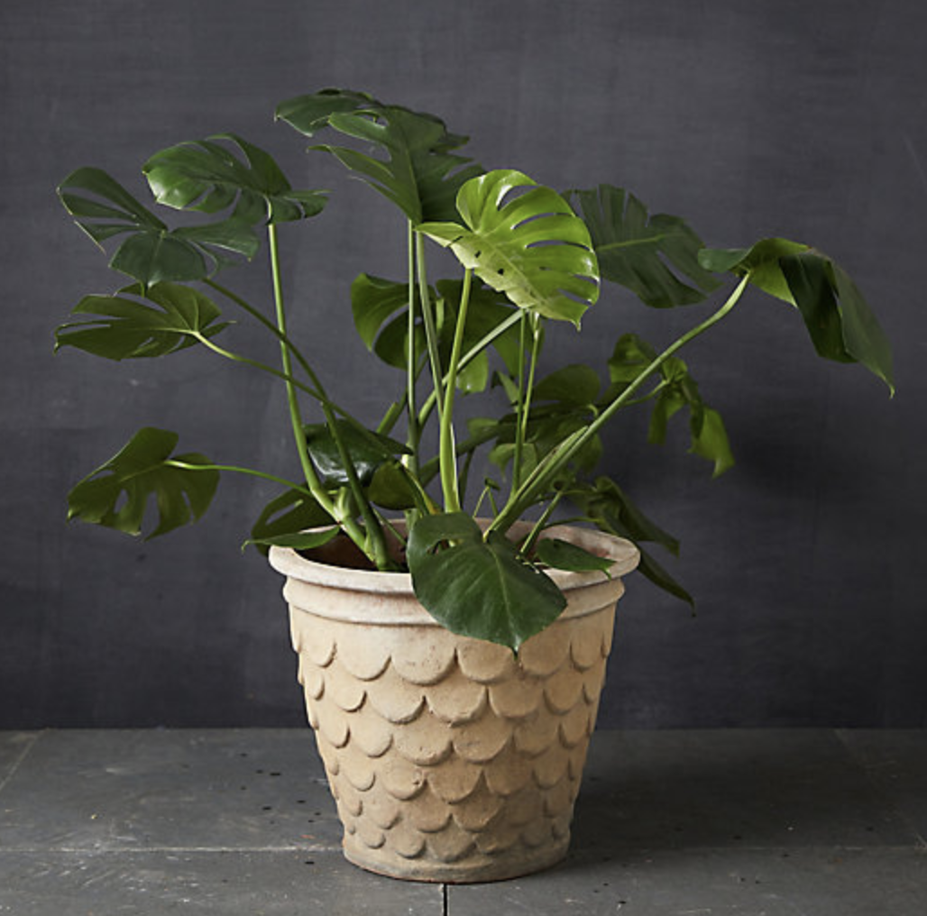 9 Creative Ways Plant Lovers Display Their Greenery