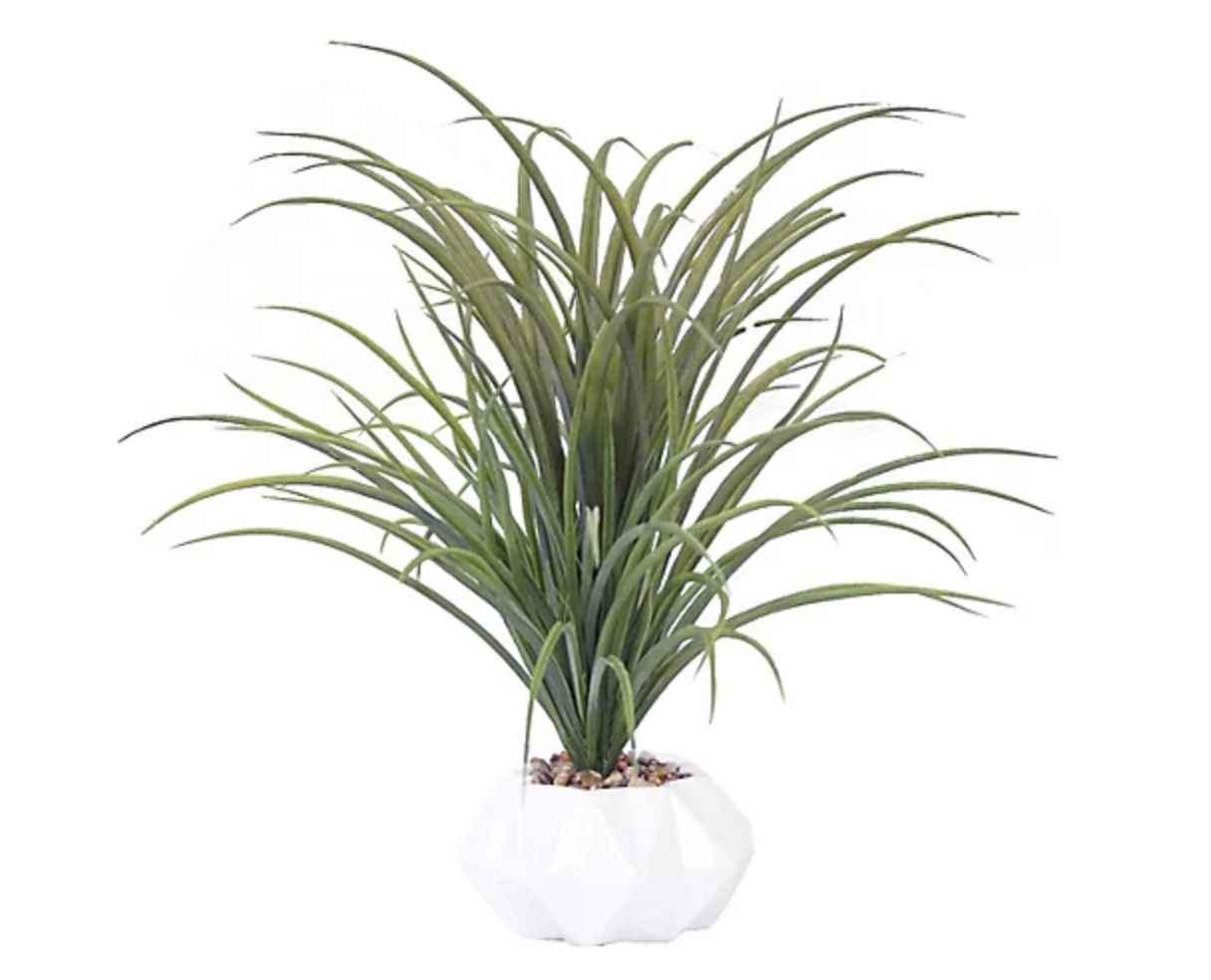grass in vase