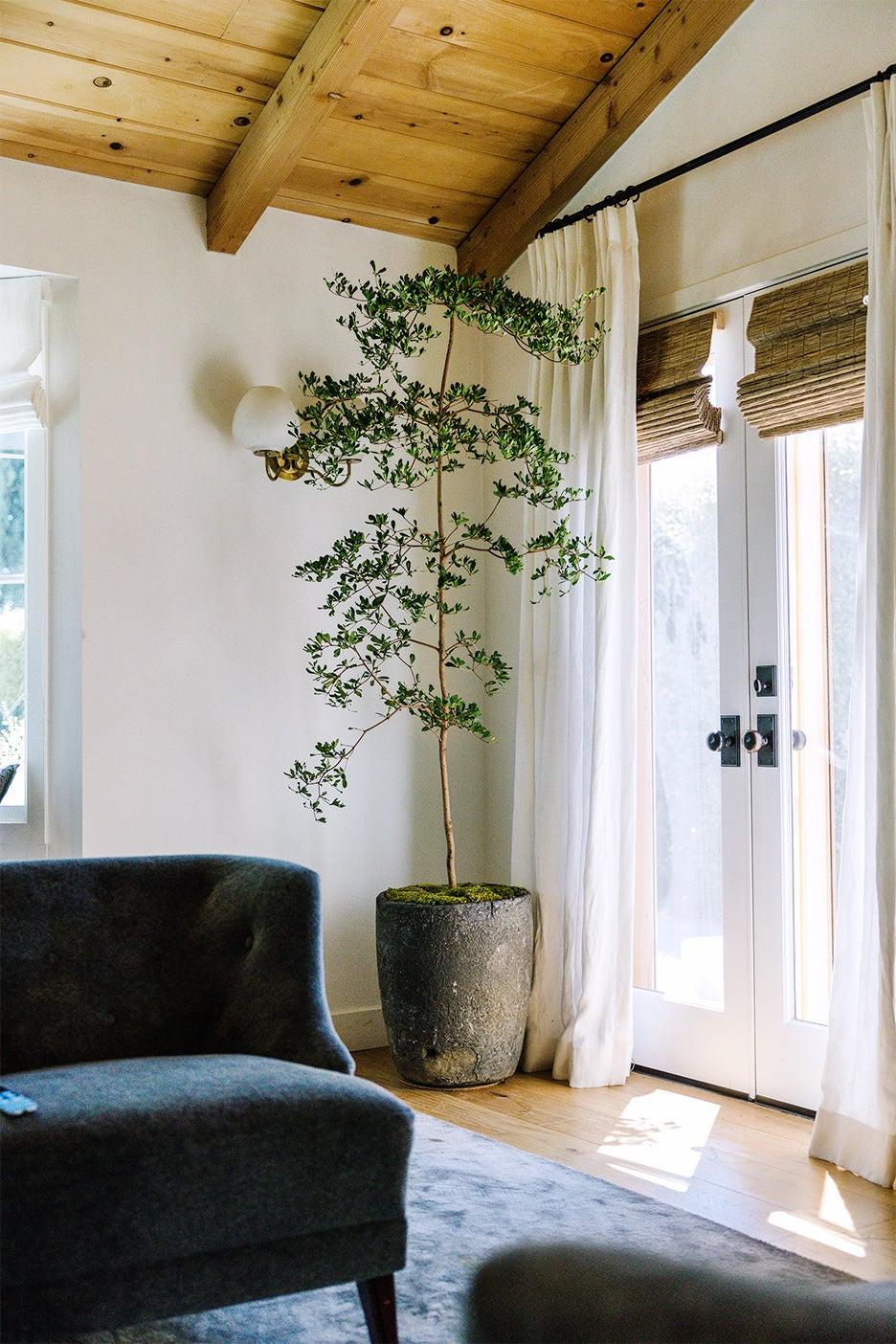 bedroom corner with olive tree