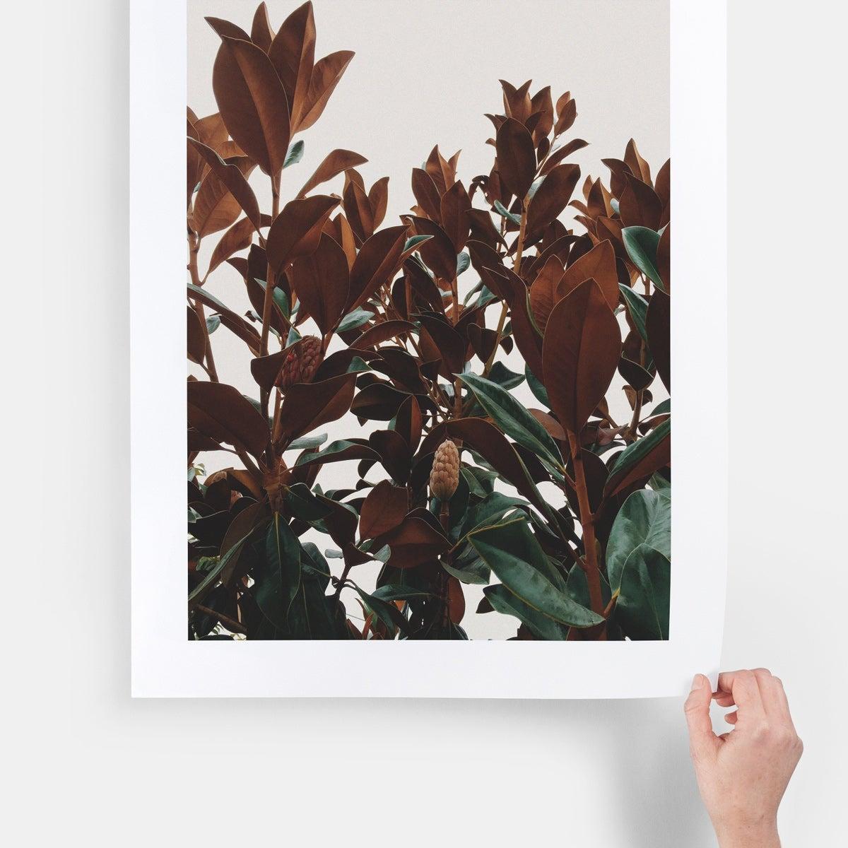 large-format-print-main01-tree-leaves_2x
