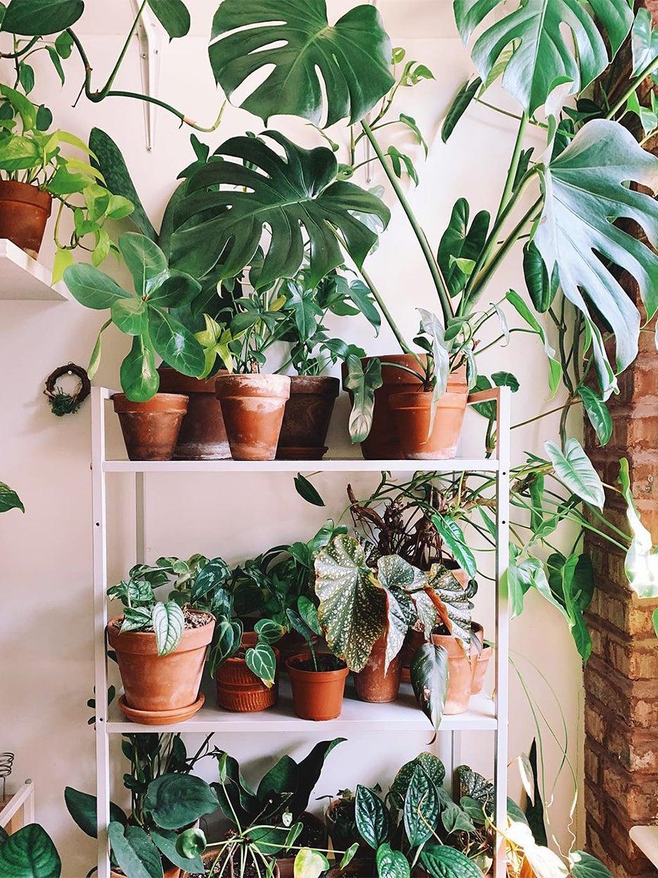 Plants on a white shelving unit
