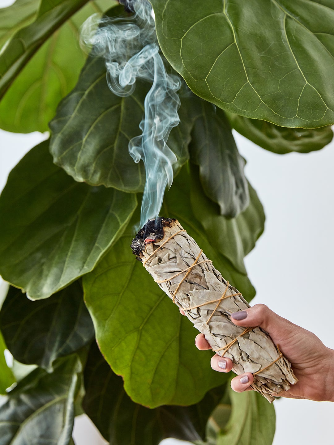 Sage burning in front of a plant