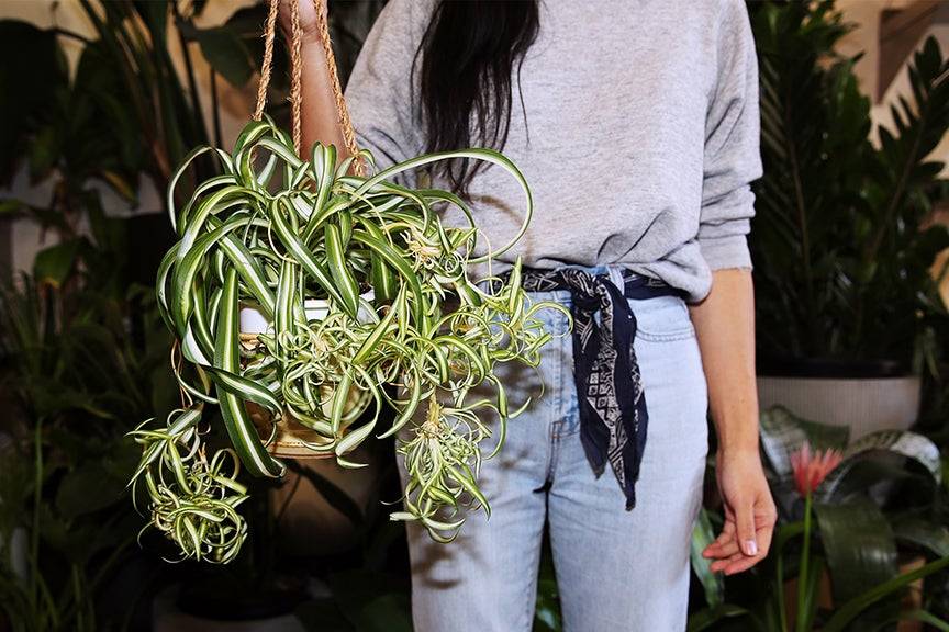 Woman holding air plants in a store