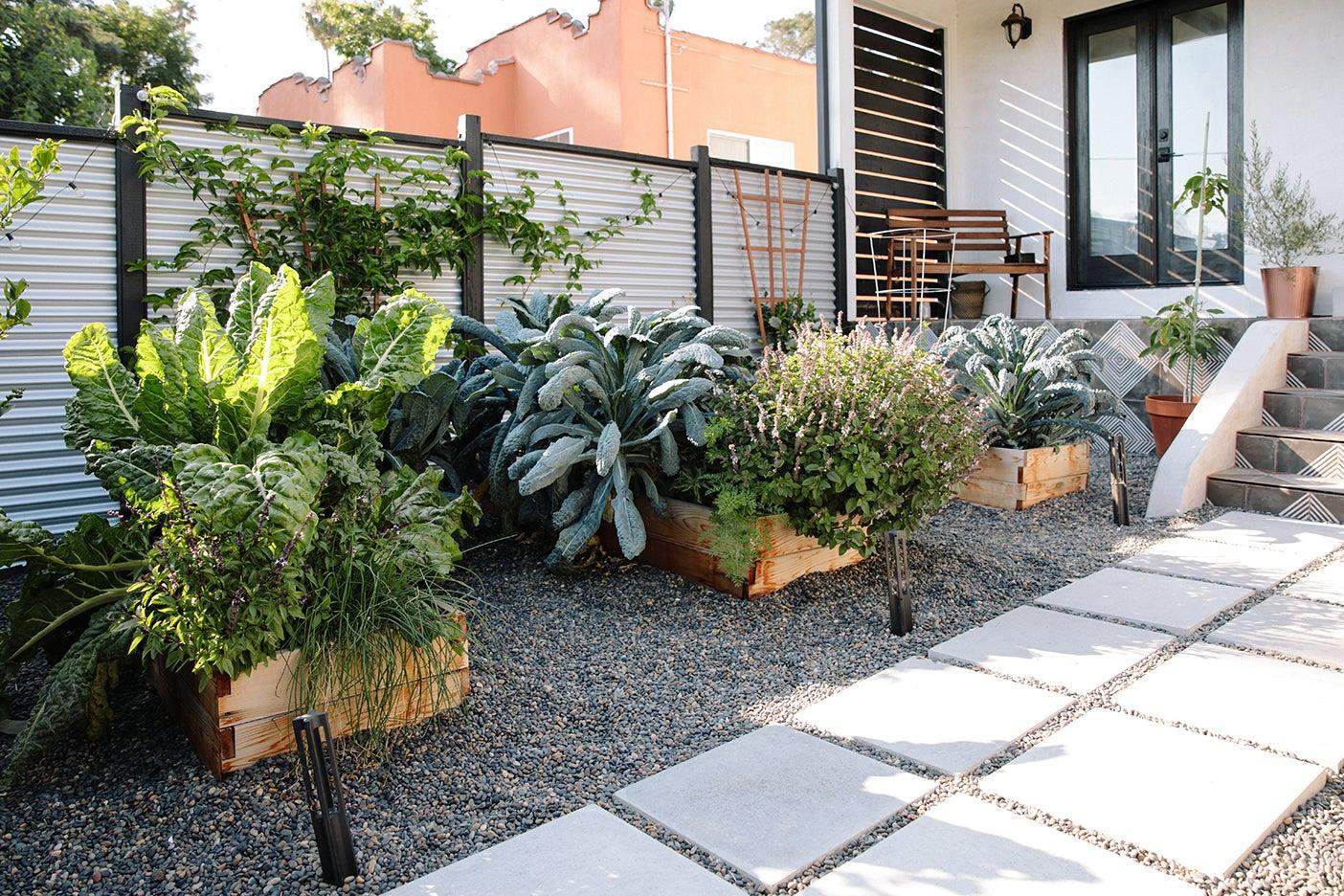 veggies in planter boxes
