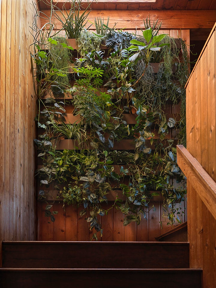 a stairwell with a plant wall