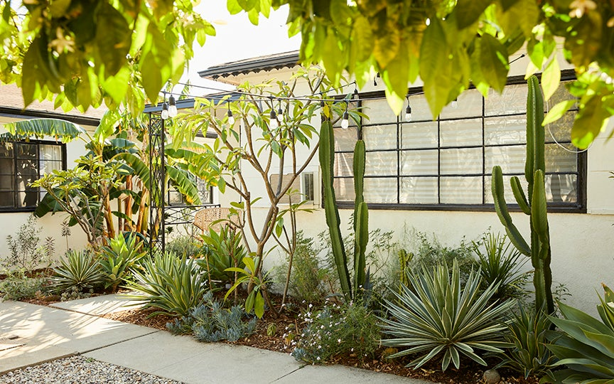 Garden with cacti against a house in Los Angeles