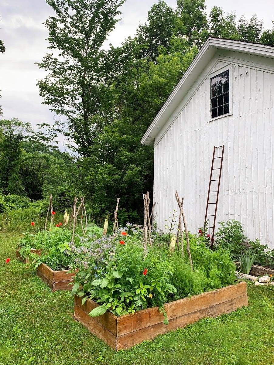 Why You Should Totally Be Growing Marijuana in Your Garden