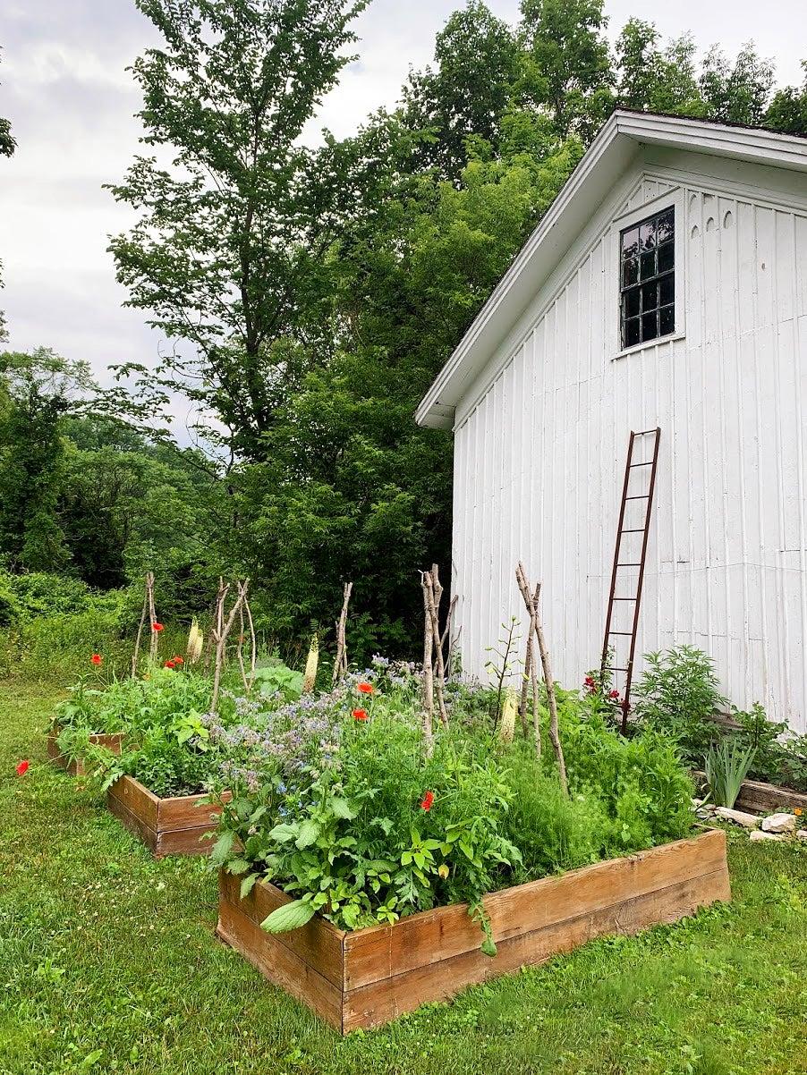 00-FEATURE-Grow-Cannabis-Garden-guide-domino