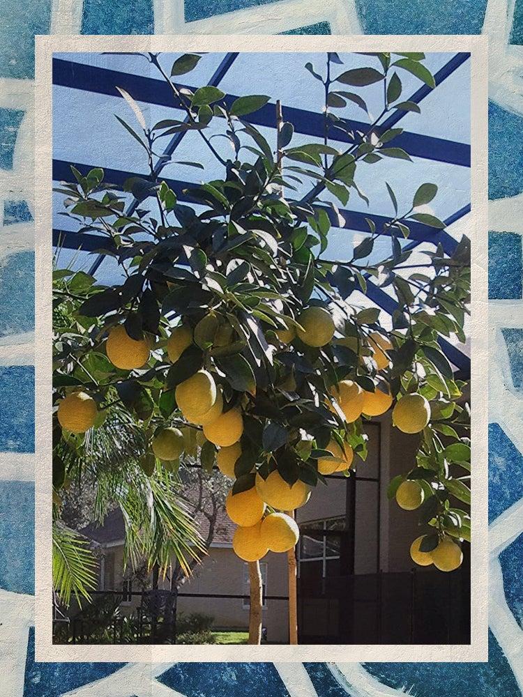 INDOOR PLANTS-amazon-commerce-3