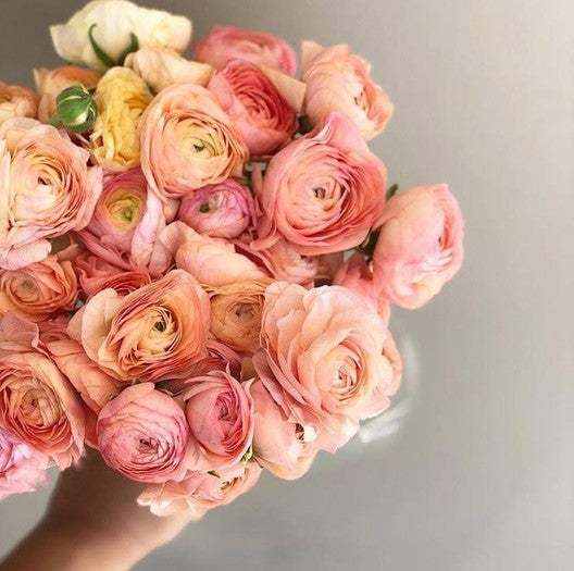 Ranunculus-Romantic-Mix_medium