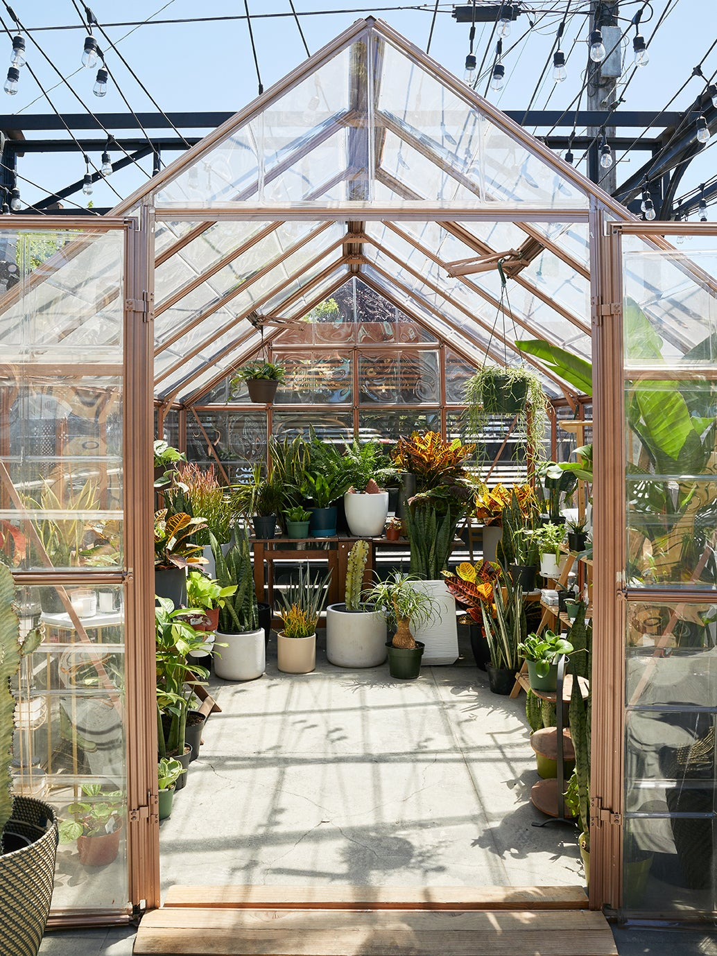 glass greenhouse filled with plants