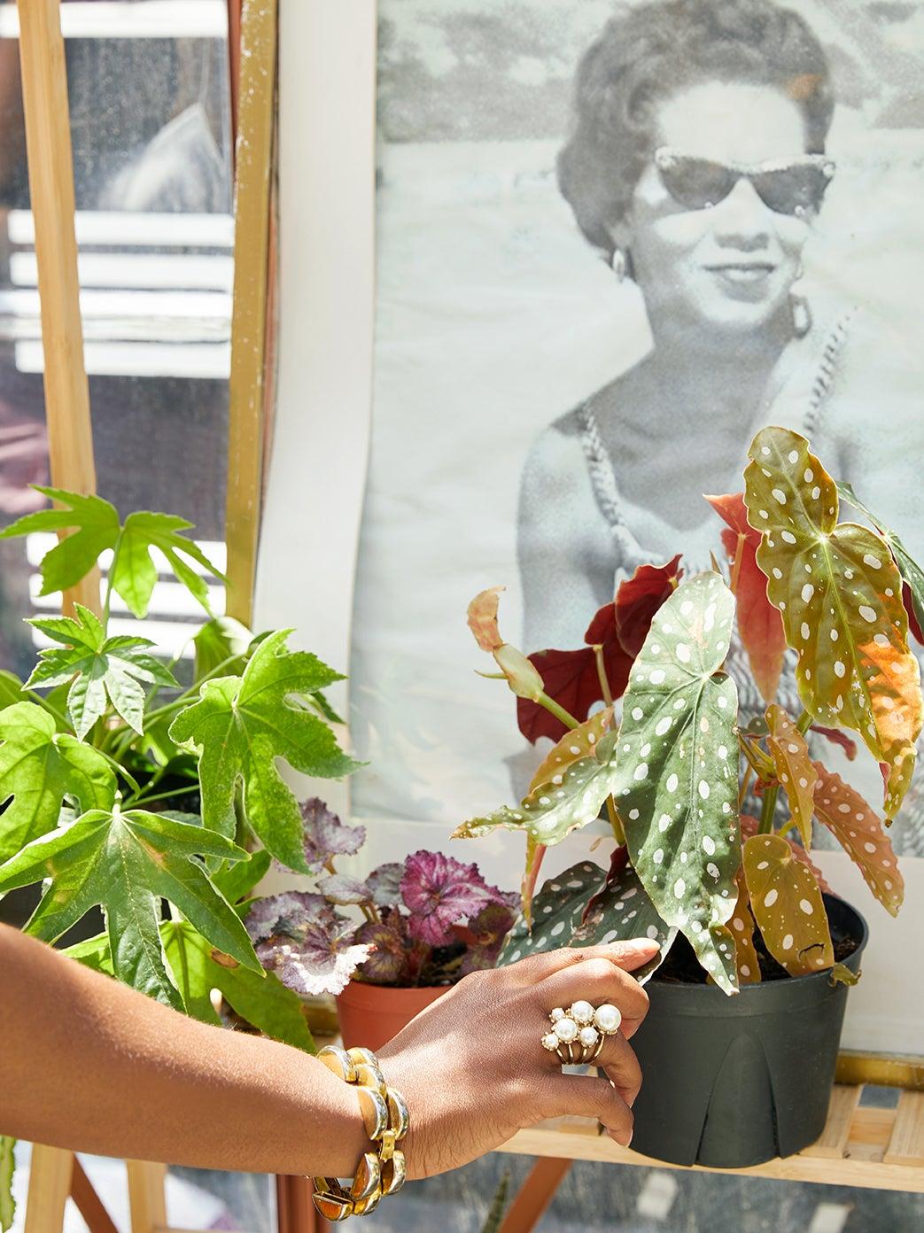 hand holding begonia plant
