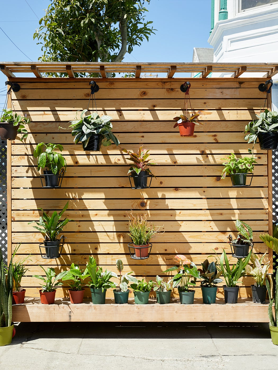wood slat wall with hanging potted plants