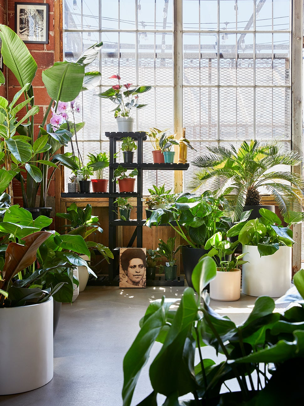 inside garden shop with plants