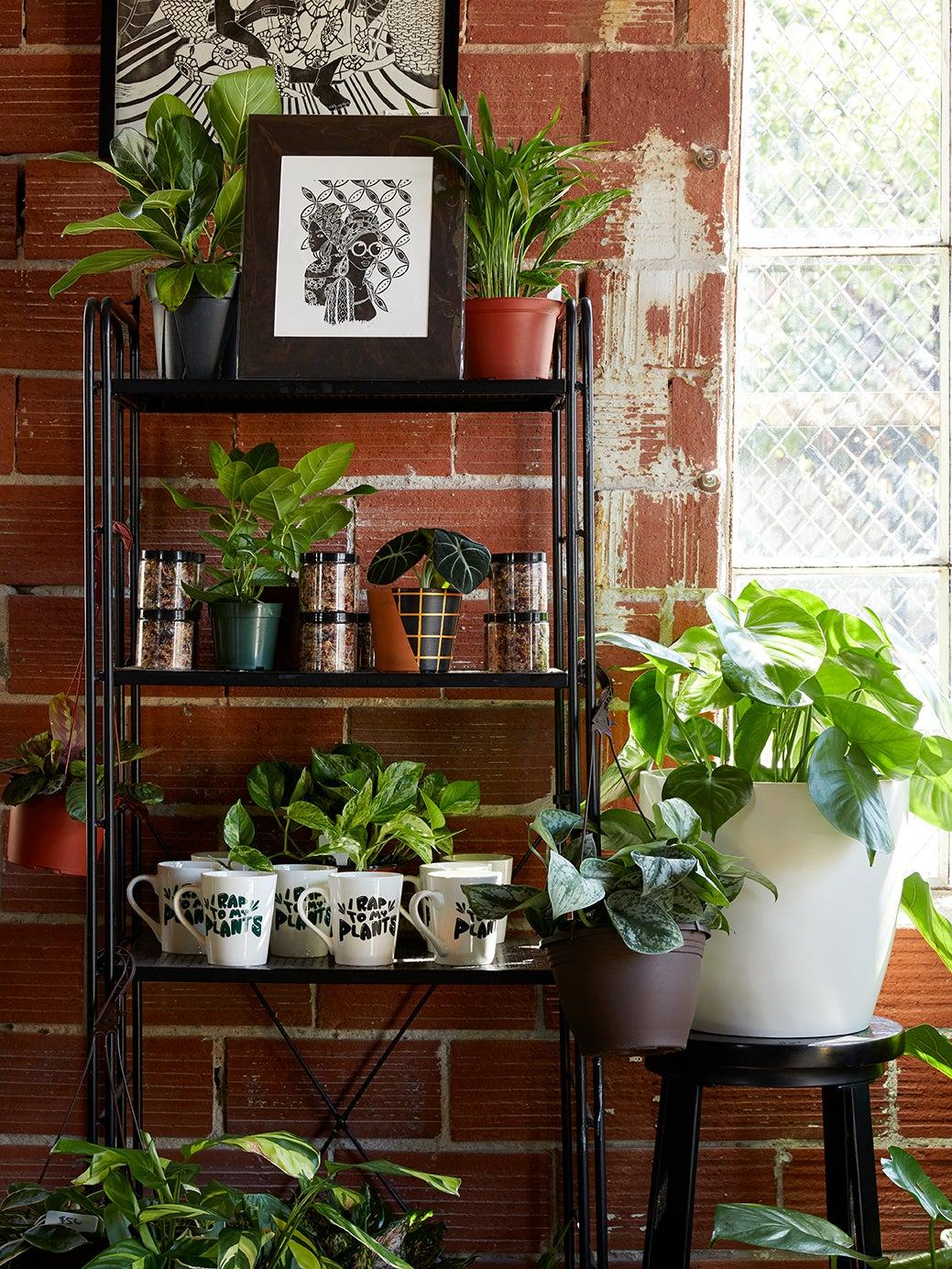 plants in metallic pots on meatl shelf