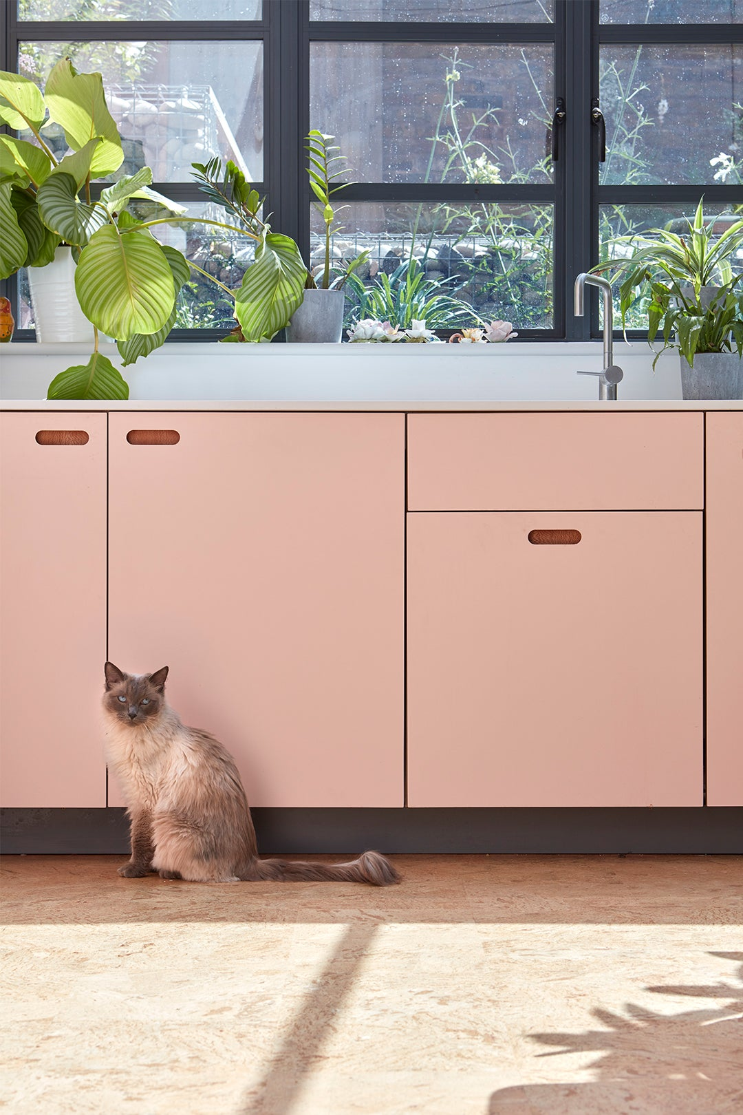 cat in front of pink kitchen cabinets
