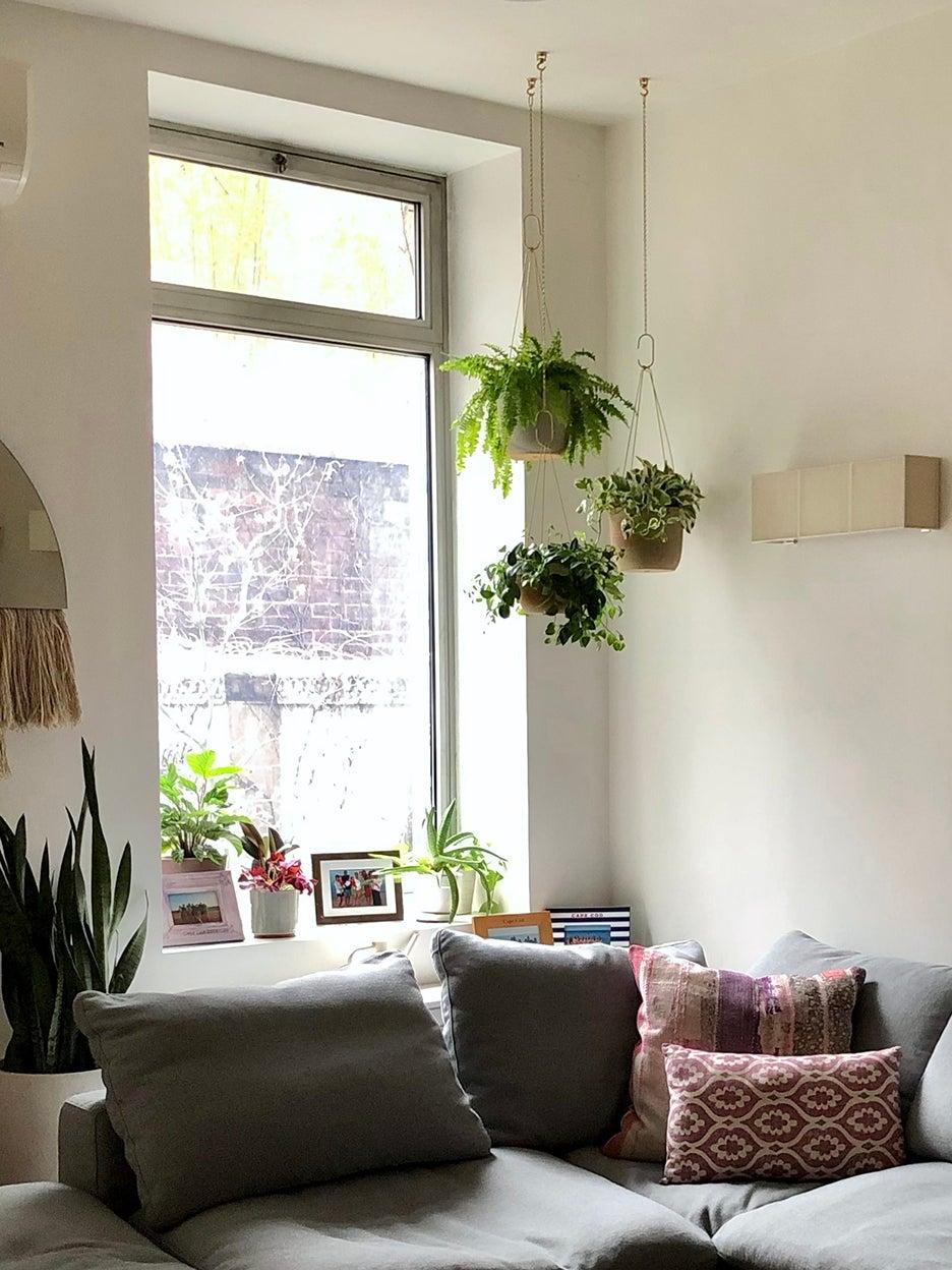 hanging plants above sofa