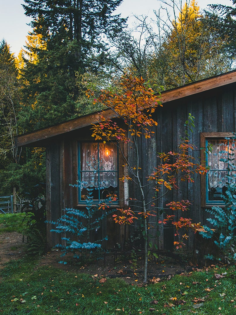 cozy shed cabin