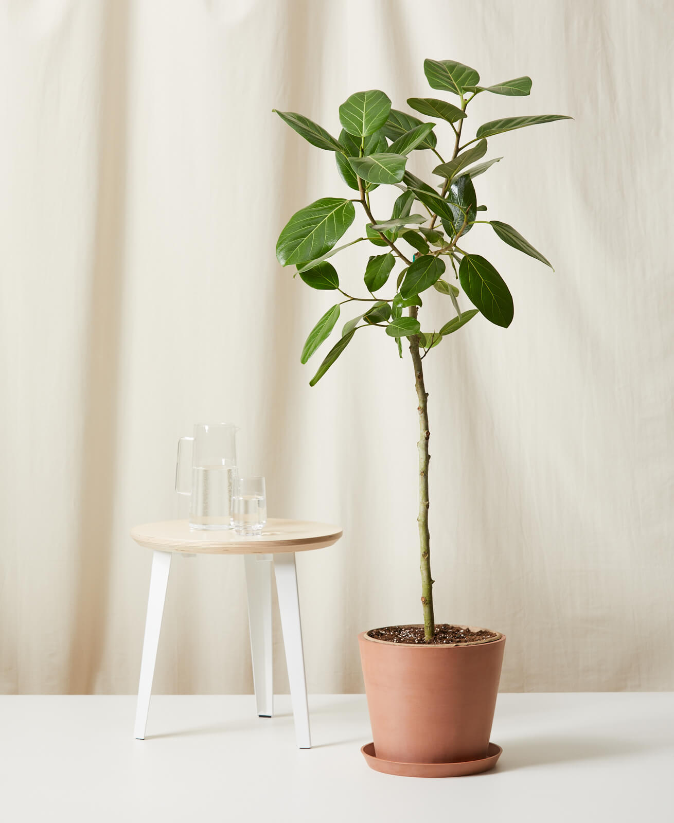 We Keep Spotting This Indoor Tree Everywhere—And We Mean Everywhere