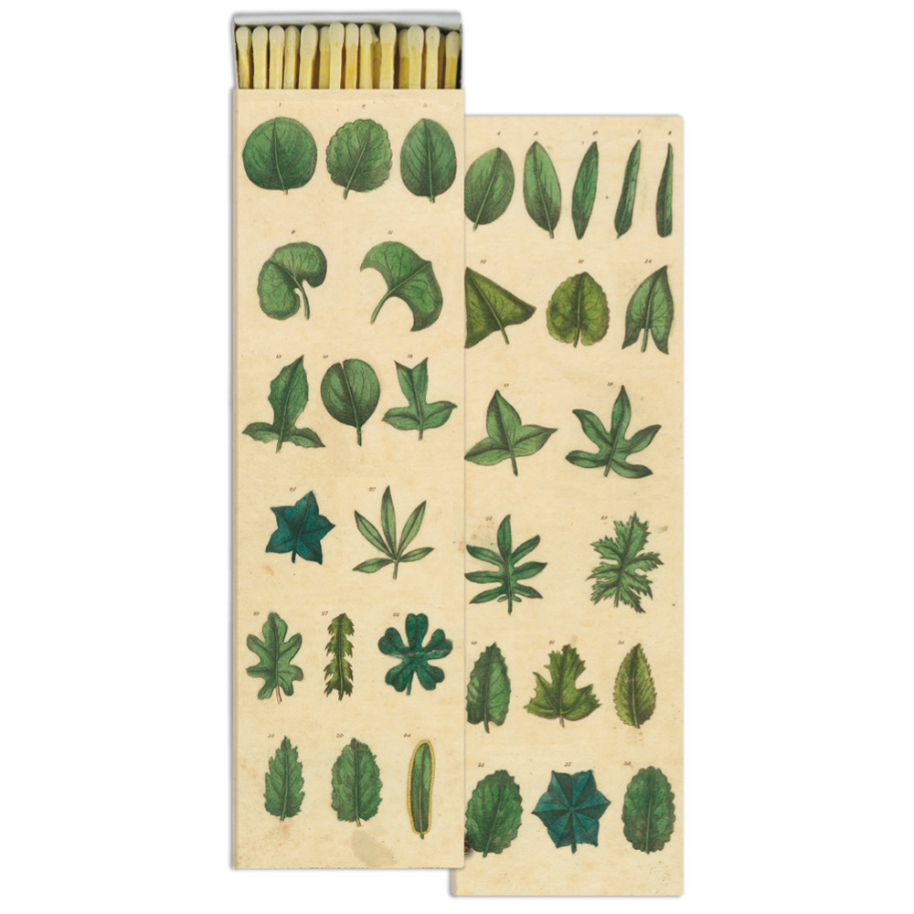 matchbox with green leaves on box