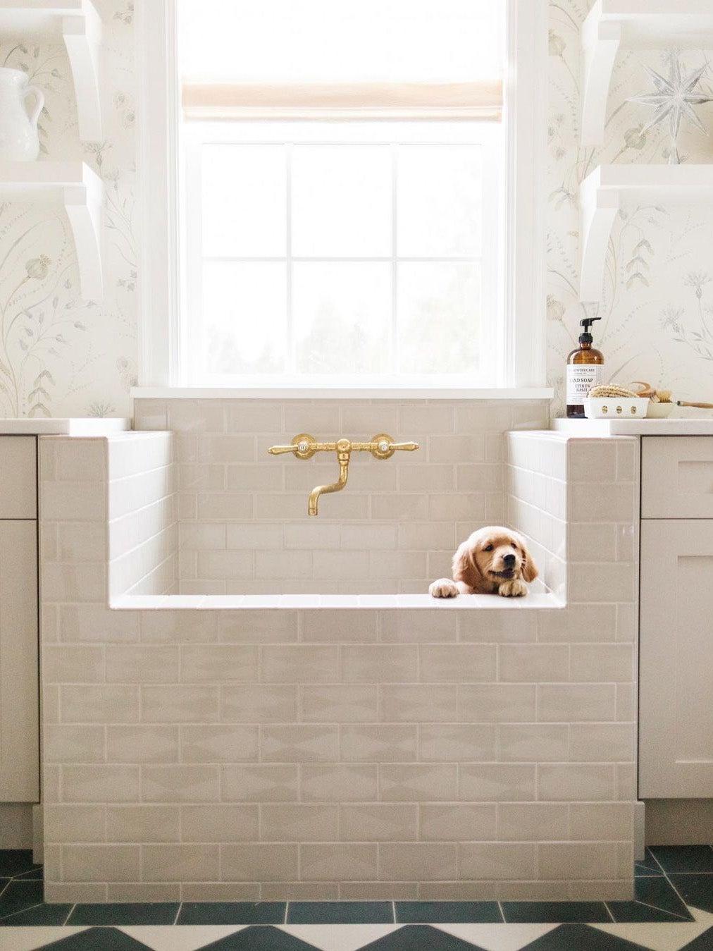 puppy in dog wash